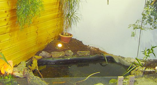 das wichtigste über schmuckschildkröten, Garten ideen